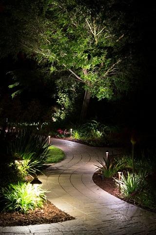 arbre illuminé